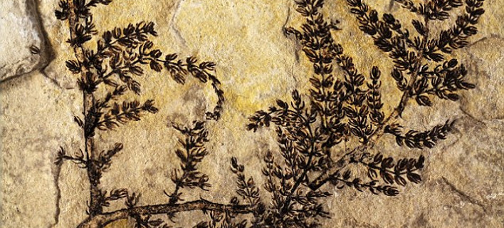 Ανακαλύφθηκε ένα από τα πρώτα λουλούδια της Γης[εικόνες]