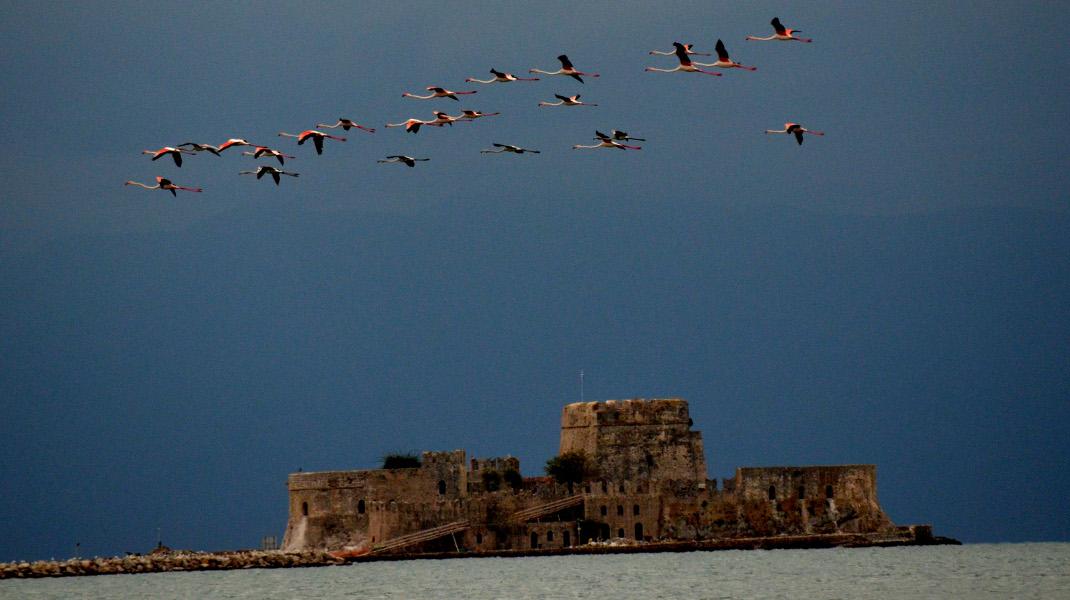 Μαγική εικόνα στο Ναύπλιο -Κοπάδι 27 φλαμίνγκο πάνω από το Μπούρτζι -Φωτογραφία: EUROKINISSI