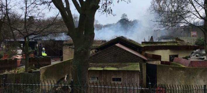 Φωτιά στο Ζωολογικό Κήπο του Λονδίνου -Καταστράφηκε καφετέρια /Φωτογραφία: ΒΒC