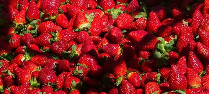 Φράουλες/Φωτογραφία: Eurokinissi