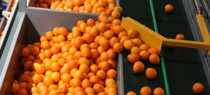 Φρούτα και λαχανικά εκτίναξαν τις εξαγωγές αγροτικών προϊόντων το 2016