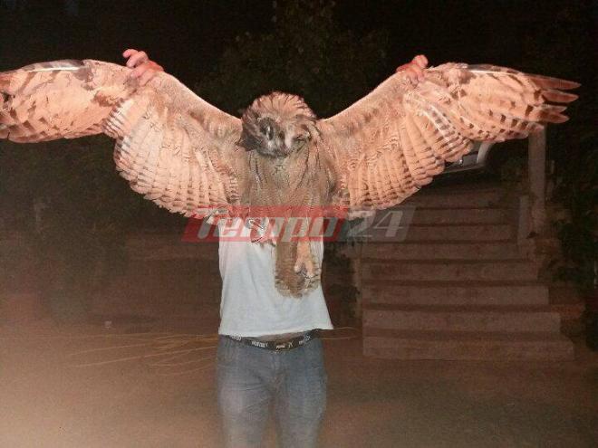 Σούπερ μεγάλο πουλί εικόνες