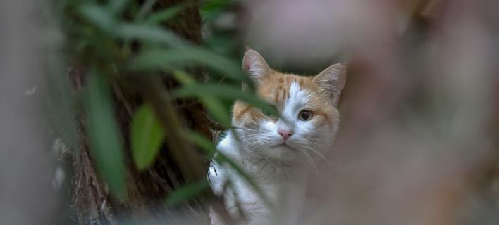 Απίστευτο! Γάτα εγκλωβίστηκε σε ΑΤΜ στη Λάρισα /Φωτογραφία Αρχείου: Intime News