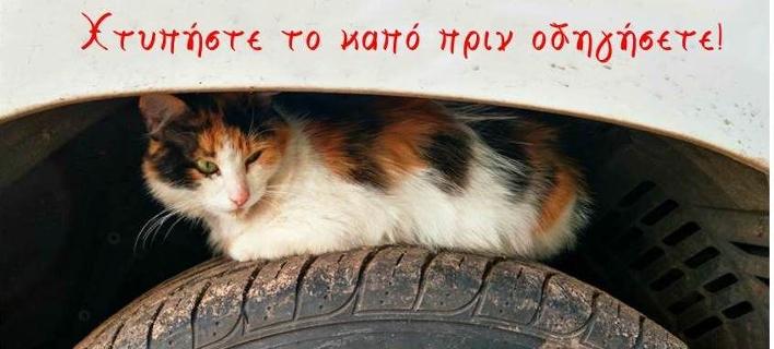Γατάκι στην ρόδα του αυτοκινήτου