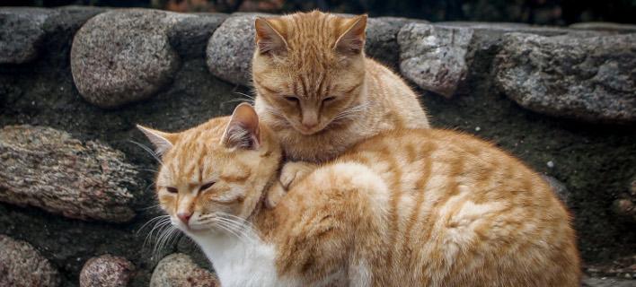 Μια αγκαλιά νικάει το... κρύο / Φωτογραφία: EUROKINISSI