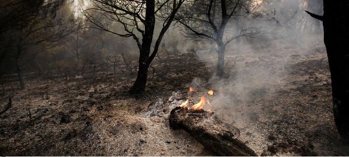 Από την καταστροφική πυρκαγιά στον Βαρνάβα. ΦΩΤΟΓΡΑΦΙΑ: INTIME NEWS /ΜΠΑΜΠΟΥΚΟΣ ΓΙΩΡΓΟΣ