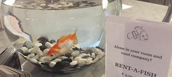Ξενοδοχείο βρήκε τον πιο ευφάνταστο τρόπο για να καταπολεμά τη μοναξιά των πελατών του