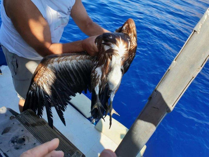 Το άγριο ζώο δέχτηκε τις πρώτες βοήθειας εθελόντριας της ΕΚΠΑΖ στην ακτή!