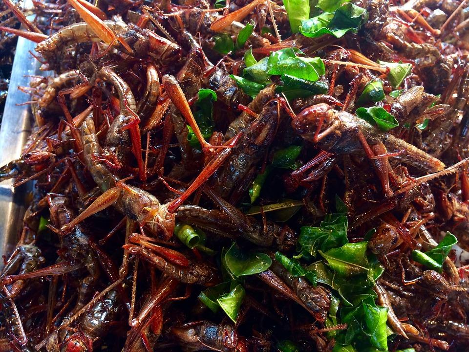 Οι τηγανητές ακρίδες είναι συνηθισμένη τροφή σε ασιατικούς λαούς/Φωτογραφία:Pixabay