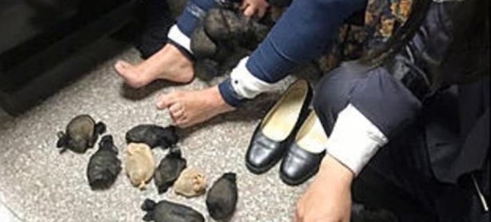 Γυναίκα είχε κρύψει 14 χάμστερ στα πόδια της (Φωτογραφία: Coast Guard Administration)