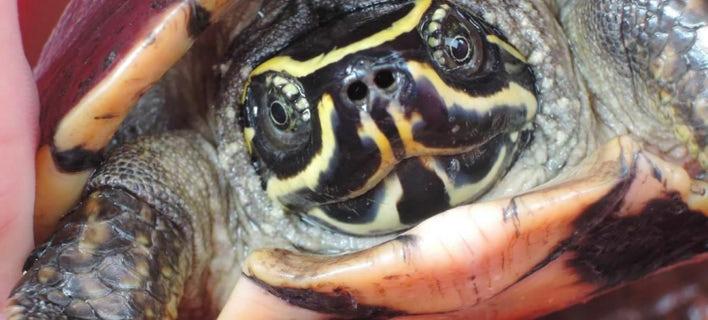 ΦΩΤΟΓΡΑΦΙΕΣ: WWF/WCS