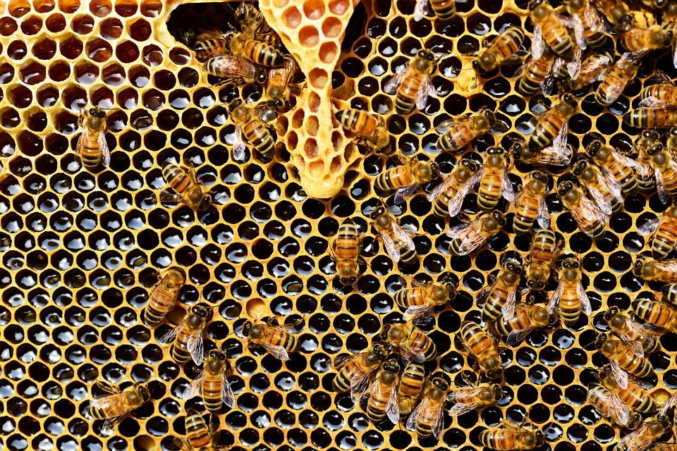 Τα παρασιτοκτόνα διεισδύουν στην κηρήθρα, ενώ οι νεονικοτινοειδείς ουσίες συμβάλλουν στην εξαφάνιση των μελισσών