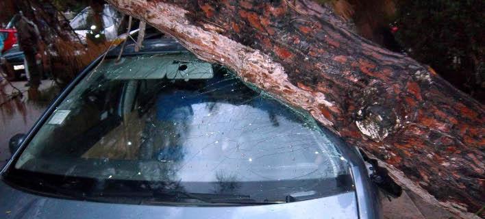 Δέντρο έπεσε πάνω σε ΙΧ/ Φωτογραφία Αρχείου: Eurokinissi