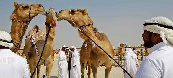 Απέκλεισαν 12 καμήλες από διαγωνισμό ομορφιάς -Επειδή... είχαν κάνει μπότοξ [εικόνες]