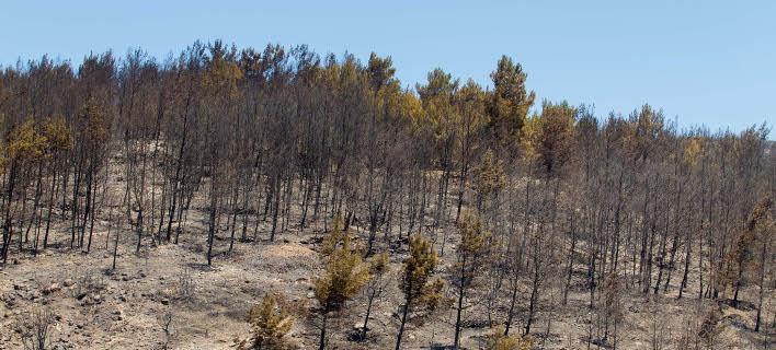 Απογοήτευση στην Κρήτη: Χιλιάδες στρέμματα καμμένης γης άφησαν πίσω τους οι φωτιές