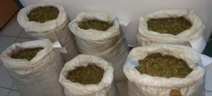 Σέρρες: Εξαρθρώθηκε σπείρα διακίνησης ναρκωτικών -4 συλλήψεις [εικόνες]/Φωτογραφία: elas