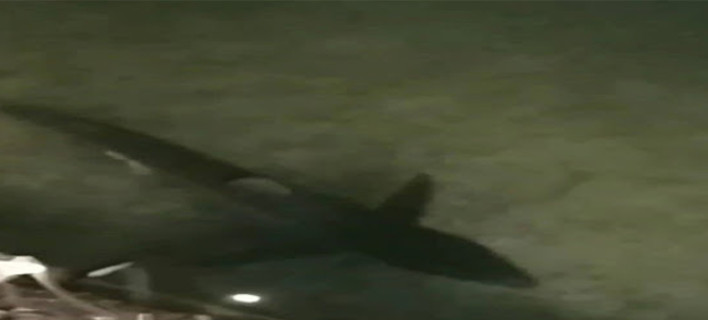 Καρχαρίας Λουτράκι /Φωτογραφία: loutrakiblog
