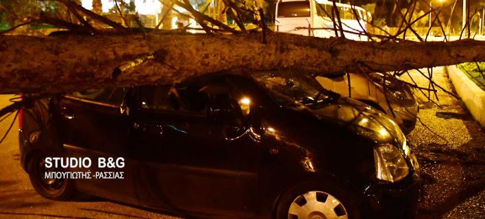 Απίστευτες καταστροφές στο Ναύπλιο: Οι θυελλώδεις άνεμοι έριξαν δέντρα και διέλυσαν ΙΧ [εικόνες]