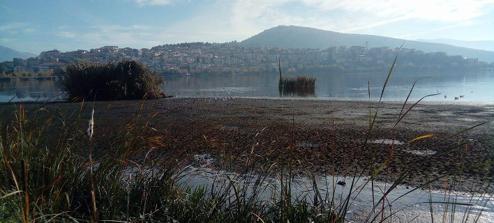 Καθησυχάζουν οι επιστήμονες για τη λίμνη της Καστοριάς: Εχει «στεγνώσει» ξανά [εικόνες]