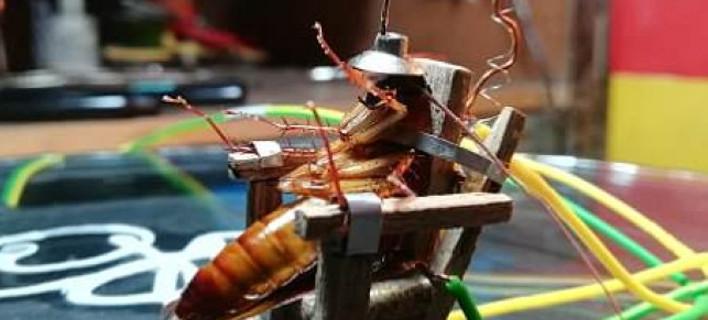 Εφτιαξε μίνι ηλεκτρική καρέκλα για να σκοτώσει κατσαρίδα -Φωτογραφία: Viralpress