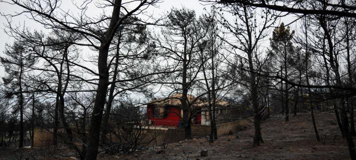 πυρκαγιά στην Κινέτα/Φωτογραφία: Eurokinissi/ΚΑΡΑΓΙΑΝΝΗΣ ΜΙΧΑΛΗΣ