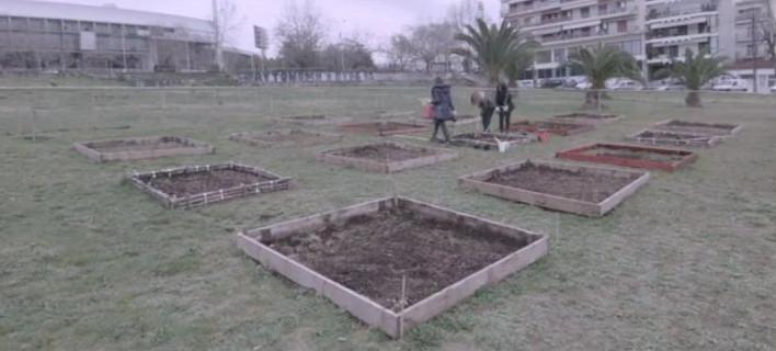 Φτιάχνουν κήπους στην πόλη [εικόνες & βίντεο]