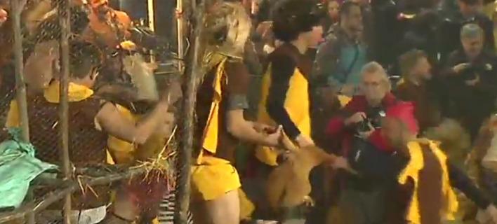 Έξι μήνες φυλάκισης με αναστολή για τους καρναβαλιστές του Τυρνάβου που πετούσαν και ποδοπατούσαν ζωντανές κότες (VIDEO)