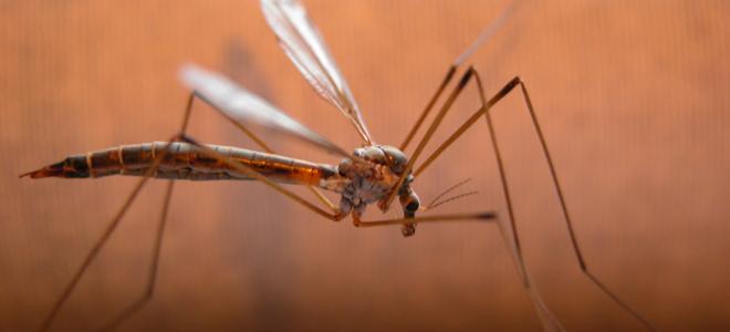 Συναγερμός στα νότια προάστια - Πέντε τα κρούσματα του ιού του Νείλου