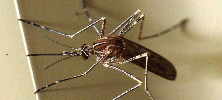 3 θάνατοι από τον ιό του Δυτικού Νείλου στην Ελλάδα (Φωτογραφία: ΑΠΕ-ΜΠΕ/Παντελής Σαΐτας)