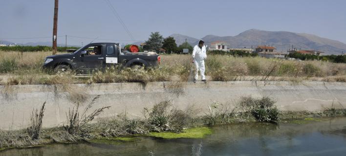 Μειώνονται τα παράπονα των πολιτών για οχλήσεις από τα κουνούπια (Φωτογραφία: Eurokinissi-ΠΑΠΑΔΟΠΟΥΛΟΣ ΒΑΣΙΛΗΣ)