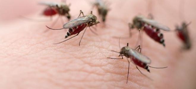Μέτρα προστασίας από τον ιό του Δυτικού Νείλου – Πως μεταδίδεται η λοίμωξη