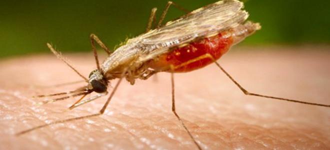 Πώς μυρίζουν οι άνθρωποι που προσελκύουν τα κουνούπια;