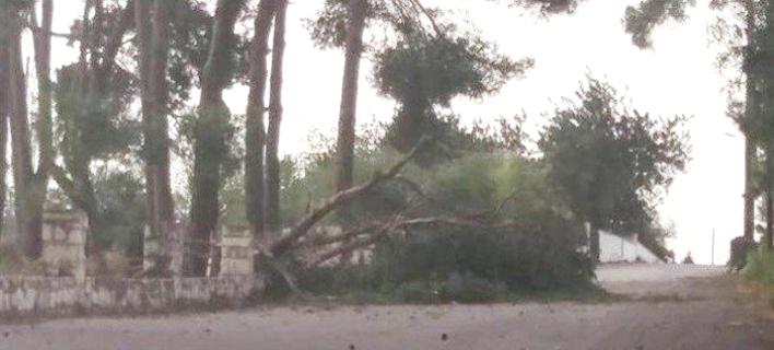 Εκλεισαν σχολεία, ξεριζώθηκαν δέντρα από τους νοτιάδες στην Κρήτη [εικόνα]