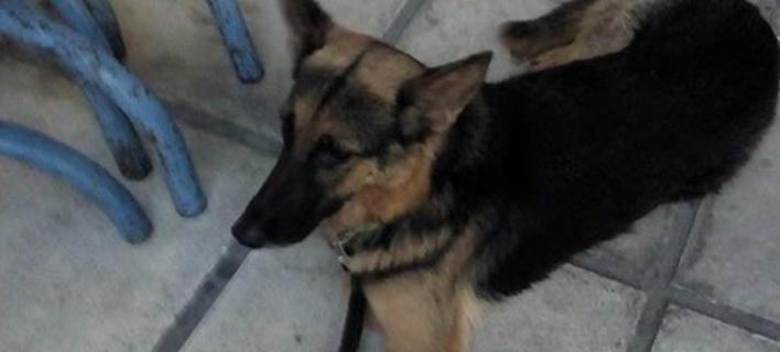Περαστικός πέταξε τον σκύλο του στον Θερμαϊκό (Φωτογραφία: seleo)