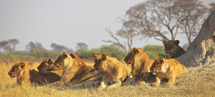 Παγκόσμια δέσμευση ζητάει η WWF: Μέσα σε 40 χρόνια ο πλανήτης έχασε το 60% των άγριων ζώων του