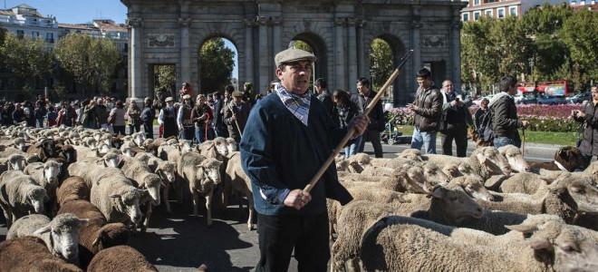 Χιλιάδες πρόβατα «πλημμύρισαν» την Κυριακή τους δρόμους της Μαδρίτης