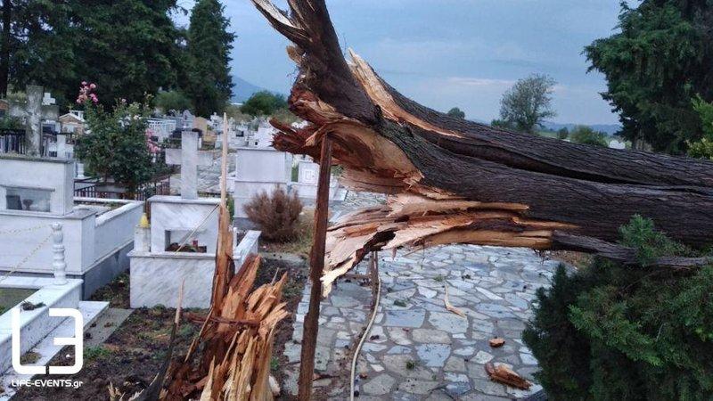 Ξεριζώθηκαν δέντρα από την κακοκαιρία