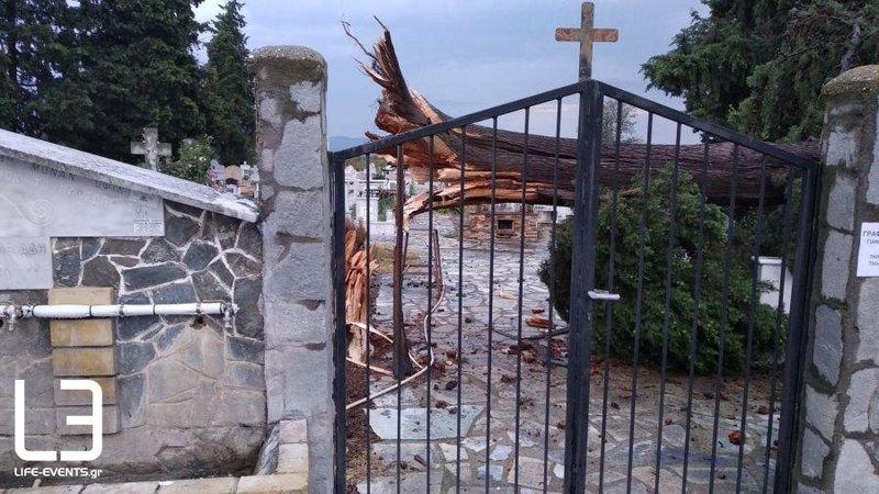 Ενα κυπαρίσσι έπεσε στο νεκροταφείο του χωριού Μαυρούδα