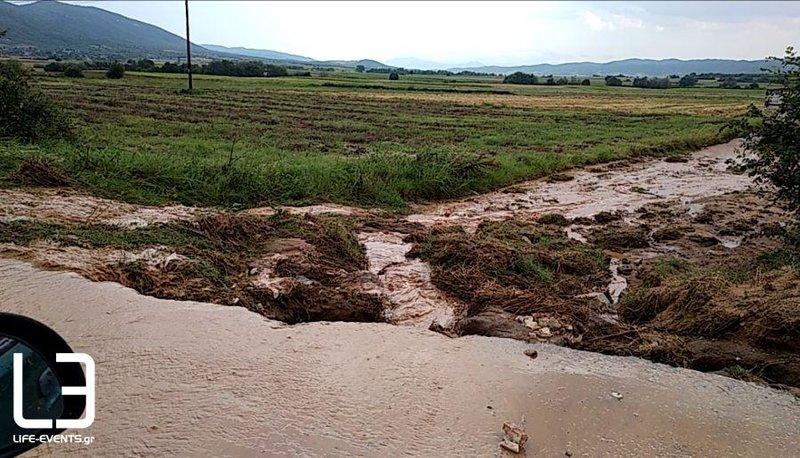 Μεγάλες καταστροφές στην καλλιέργεια ρίγανης για την οποία φημίζεται η Μαυρούδα