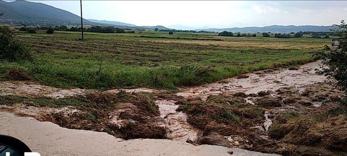 Μεγάλες είναι οι καταστροφές και στις καλλιέργειες της ρίγανης -Φωτογραφίες: Life-events.gr