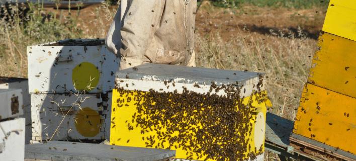 Μυστήριο με τον 32χρονο που έχασε τη ζωή του από τσίμπημα μέλισσας- Δεν βρέθηκε σημάδι από τσίμπημα