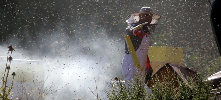 «Πλημμύρισε» μέλισσες η επαρχιακή οδός Ναυπλίου-Μυκηνών: Ανετράπη φορτηγό με κυψέλες [εικόνες]