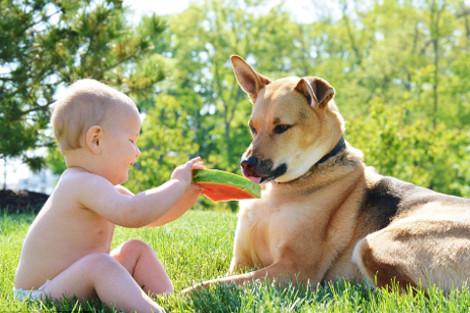 dinfo.gr - Η ιστορία αγάπης και σκανταλιάς που έλιωσε το Ιντερνετ -Το μωρό που έχει γίνει αχώριστο με τον τεράστιο σκύλο του  Πηγή: Η ιστορία αγάπης και σκανταλιάς που έλιωσε το Ιντερνετ -Το μωρό που έχει γίνει αχώριστο με τον τεράστιο σκύλο του