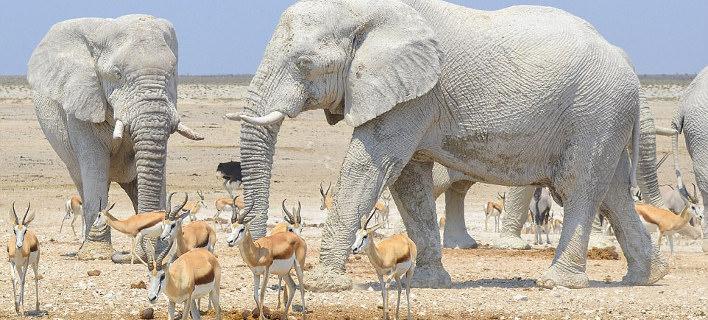 Φωτογραφία: Instagram/  Ελέφαντες «αλείφονται»... με αντηλιακό στην Αφρική και γίνονται viral- Μοιάζουν με αγάλματα [εικόνες]