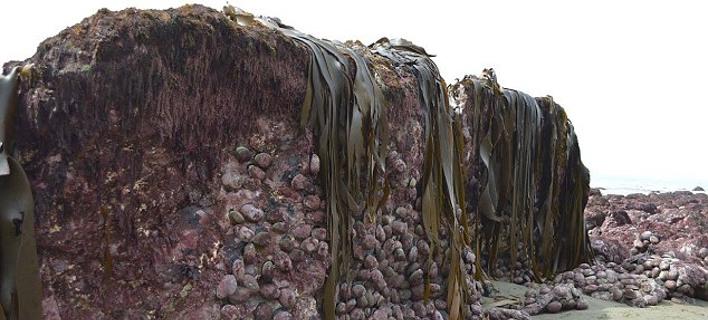 Απίστευτο: Ο βυθός της θάλασσας υψώθηκε κατά 2 μέτρα μετά τον σεισμό στη Ν. Ζηλανδία! [εικόνες]