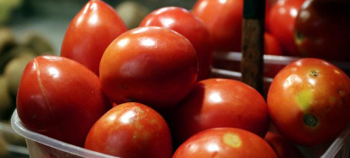 ντομάτες/Φωτογραφία: Eurokinissi/ΓΙΑΝΝΗΣ ΠΑΝΑΓΟΠΟΥΛΟΣ