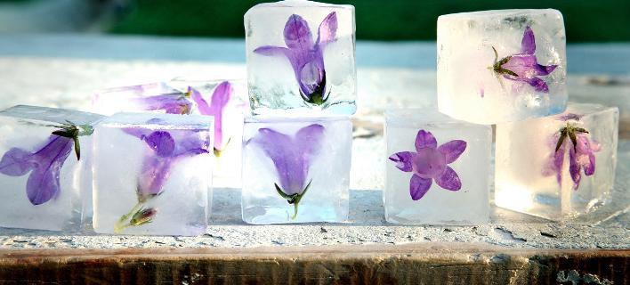 Λουλουδάτα παγάκια: Πώς τα ροφήματα γίνονται έργα τέχνης [εικόνες]