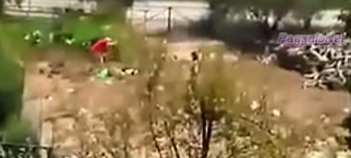 Βίντεο-σοκ: Δημοτικός σύμβουλος Καβάλας κακοποιεί βάναυσα τον σκύλο του