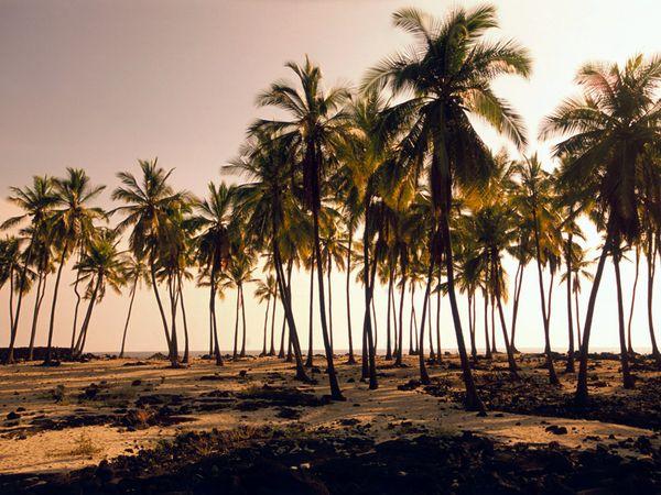 Τροπικό ταξίδι στις παραλίες των ονείρων μας