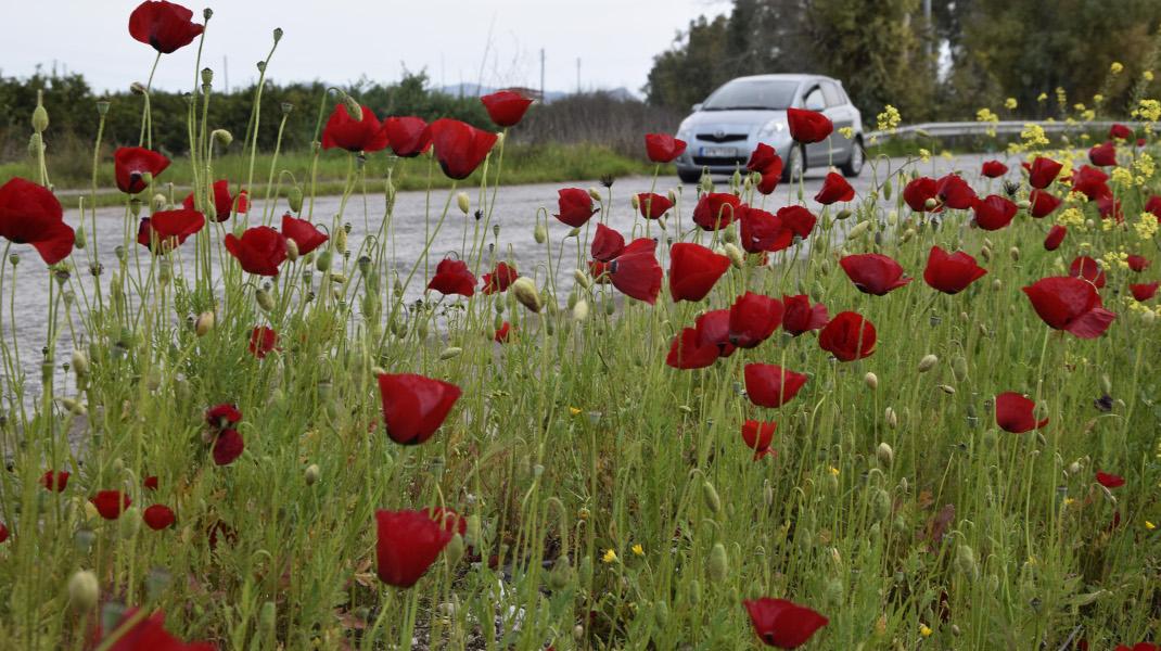 Ανοιξιάτικο όργιο της φύσης στην Αργολίδα -Φωτογραφία: Eurokinissi-ΠΑΠΑΔΟΠΟΥΛΟΣ ΒΑΣΙΛΗΣ